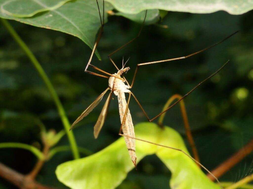 Jakie rośliny odstraszają komary, muchy i kleszcze?