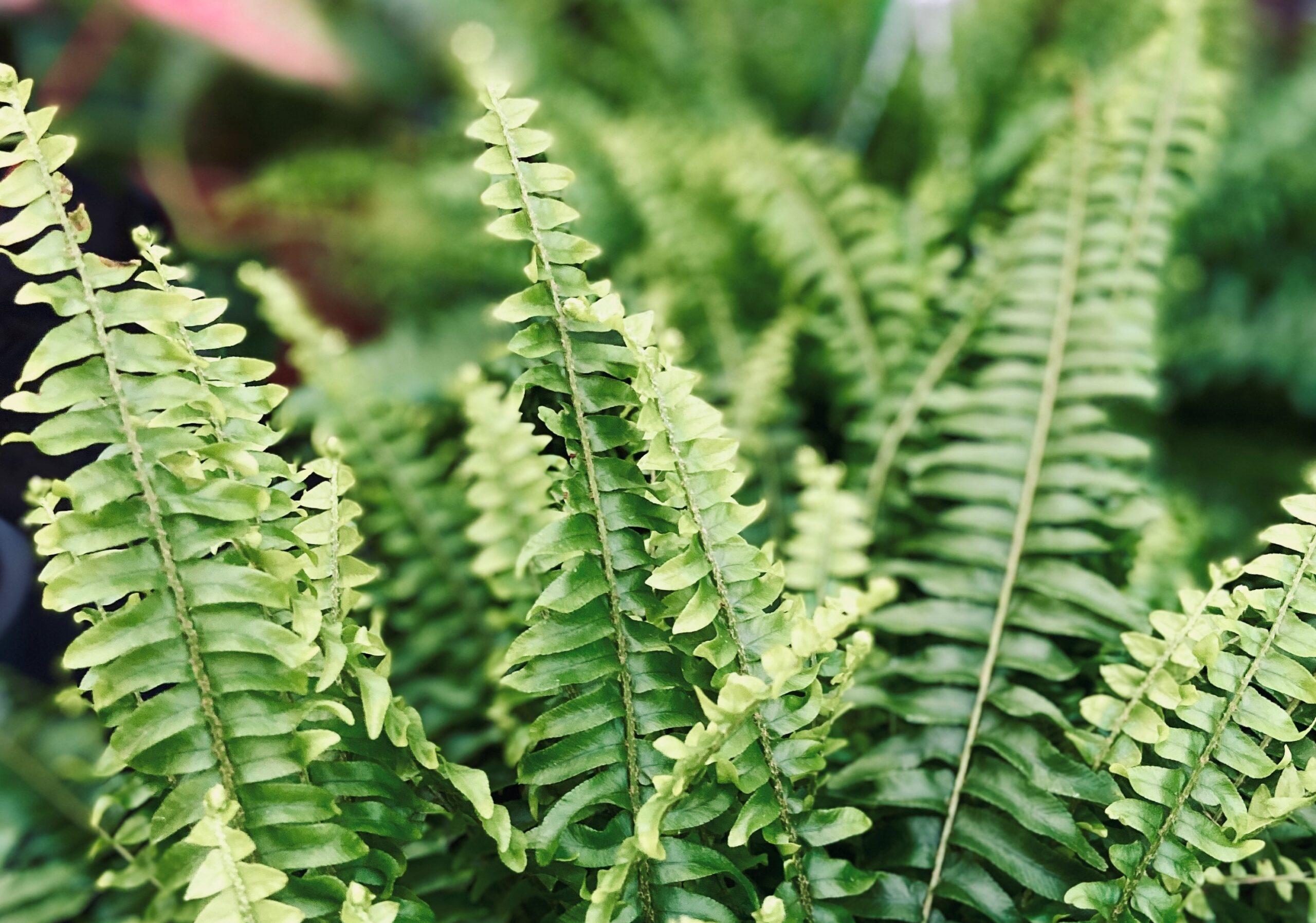 Niezwykłe rośliny oczyszczające powietrze