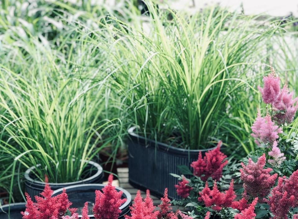 Nietypowe trawy ozdobne do ogrodu