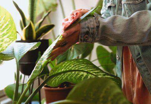 olejek neem do roślin